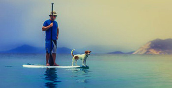 A man and his dog on a surfside